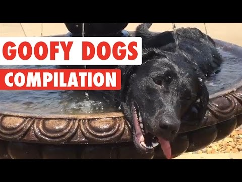 Goofy Dogs Video Compilation 2016