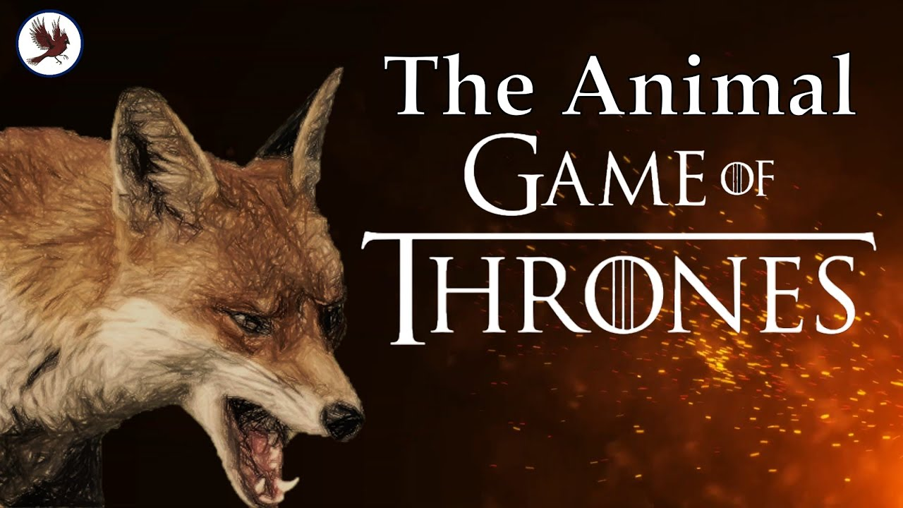 """Download The Animals of Farthing Wood: The Animal """"Game of Thrones"""" You (Probably) Never Knew About"""