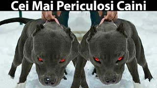 10 CELE MAI PERICULOASE RASE DE CÂINI DIN LUME! 10 Most Dangerous Dog Breeds In The World
