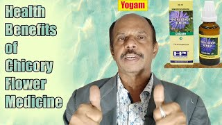 Health Benefits Of Chicory Flower Remedy Tamil | Yogam | யோகம்