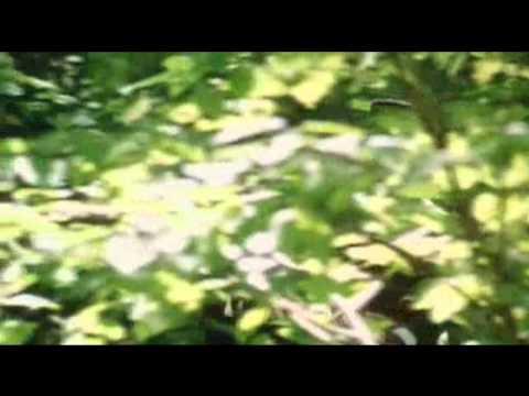 Fitzwilliam Darcy & John Thornton - Dream on