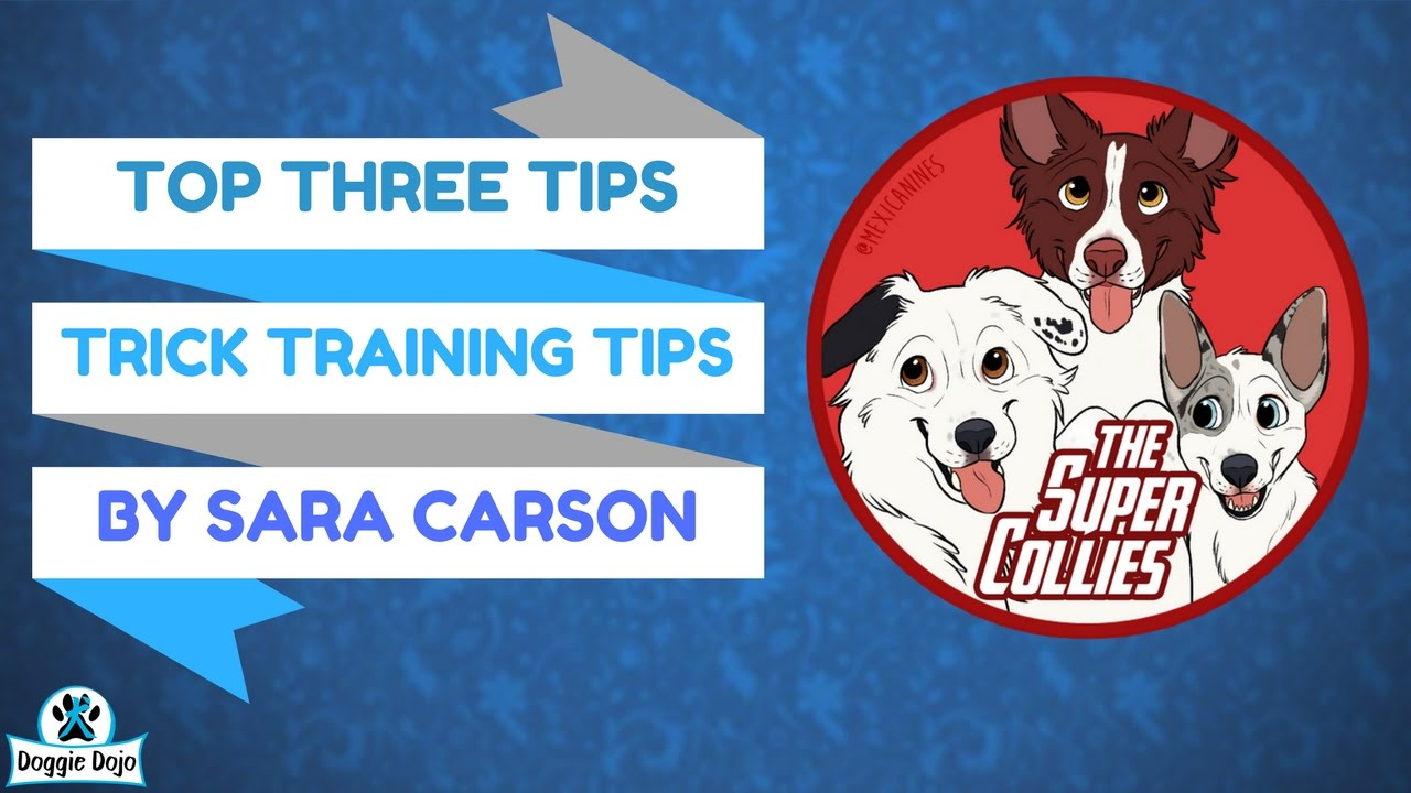 Dog Trick Training Tips - LIVE with Sara Carson and The Super ... | Dog Training Tips And Tricks