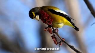 Common Winter Birds of Renfrew County