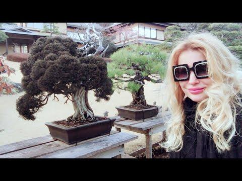 Adeyto LIVE 520yo Bonsai Tree @ HAPPO-EN Japanese Garden & Wedding Halls TOKYO Japan