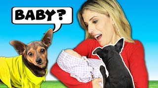 Dogs Meet Baby for the First Time  Emotional