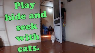 Play hide and seek with cats  Animals Hide And Seek