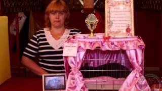 Британская кошка Arletta British Alko  и ее жизнь в картинках