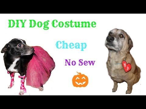 DIY: Cheap And Easy Dog Costumes