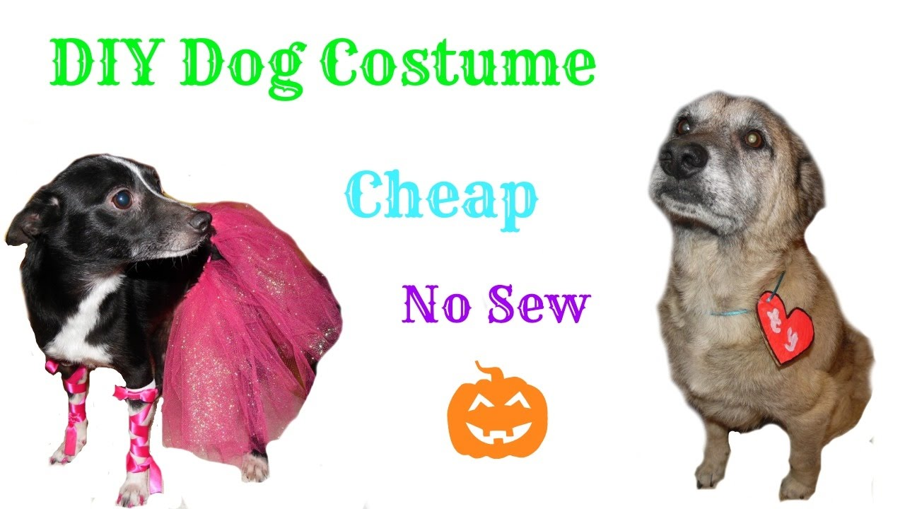 Diy cheap and easy dog costumes youtube solutioingenieria Image collections