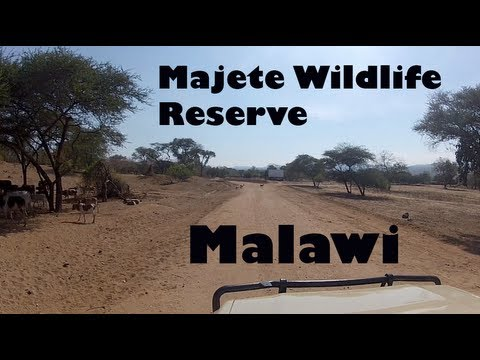 Experience Majete Wildlife Reserve - Malawi, Africa