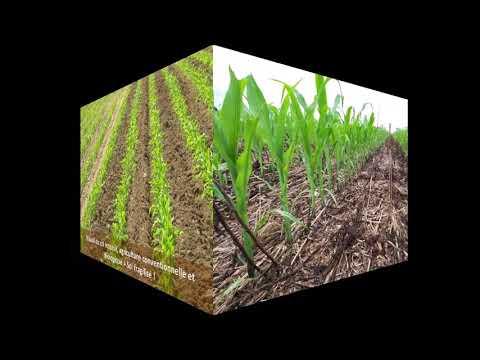 Pourquoi j'ai arrêté l'agriculture biologique en cultures céréalières ?