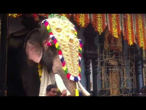 Torturing  Captive elephants in Kerala , India