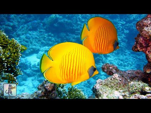 2 Hours of Beautiful Coral Reef Fish Relaxing Ocean Fish & Stunning Aquarium Relax  1080p 2