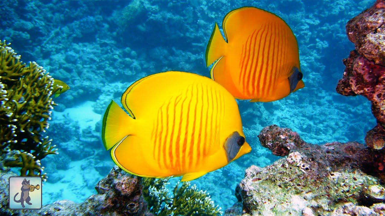 Stunning Underwater Marine Life ~ Coral Reef Fish & The Best Relax Music
