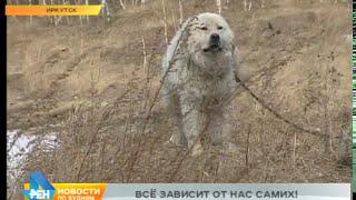 Заявление в полицию может спасти собак, которых бросили умирать на цепи в Иркутске