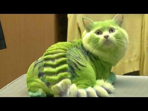 30+ Most Bizarre & Hilarious Pet Haircuts