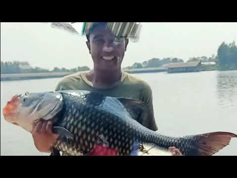 New Bungsamran Fishing Park 2020 - Mekong Catfish & Siamese Carp Fishing