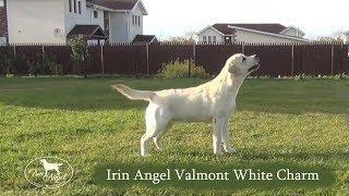 Irin Angel Valmont White Charm (boy 6 months)