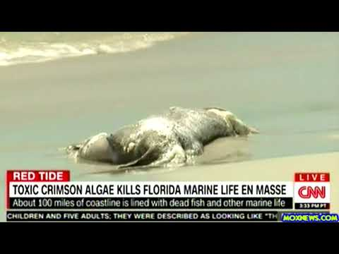 Millions Of Dead Sea Creatures Washing Ashore Along Florida