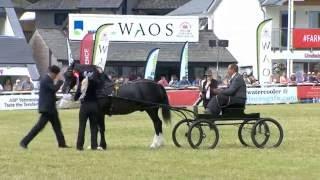 Pencampwriaeth Gyrru Cymreig | Welsh Driving Championship