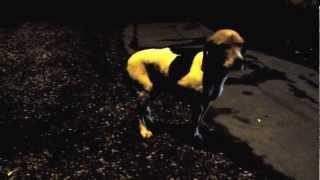 Найдена собака!! Хозяин найдись и отзовись!