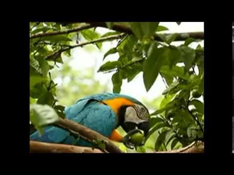 Spirit of the Rainforest (David Arkenstone) - Shamans Grove