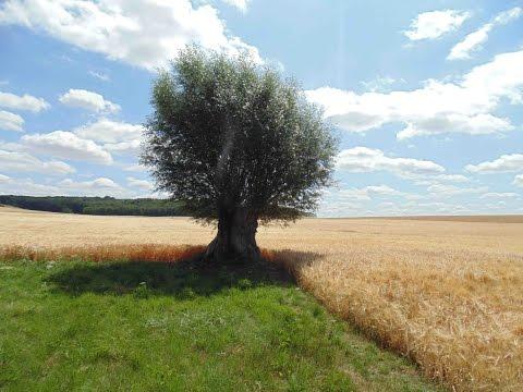 Catherine Deneuve - Agroforesterie