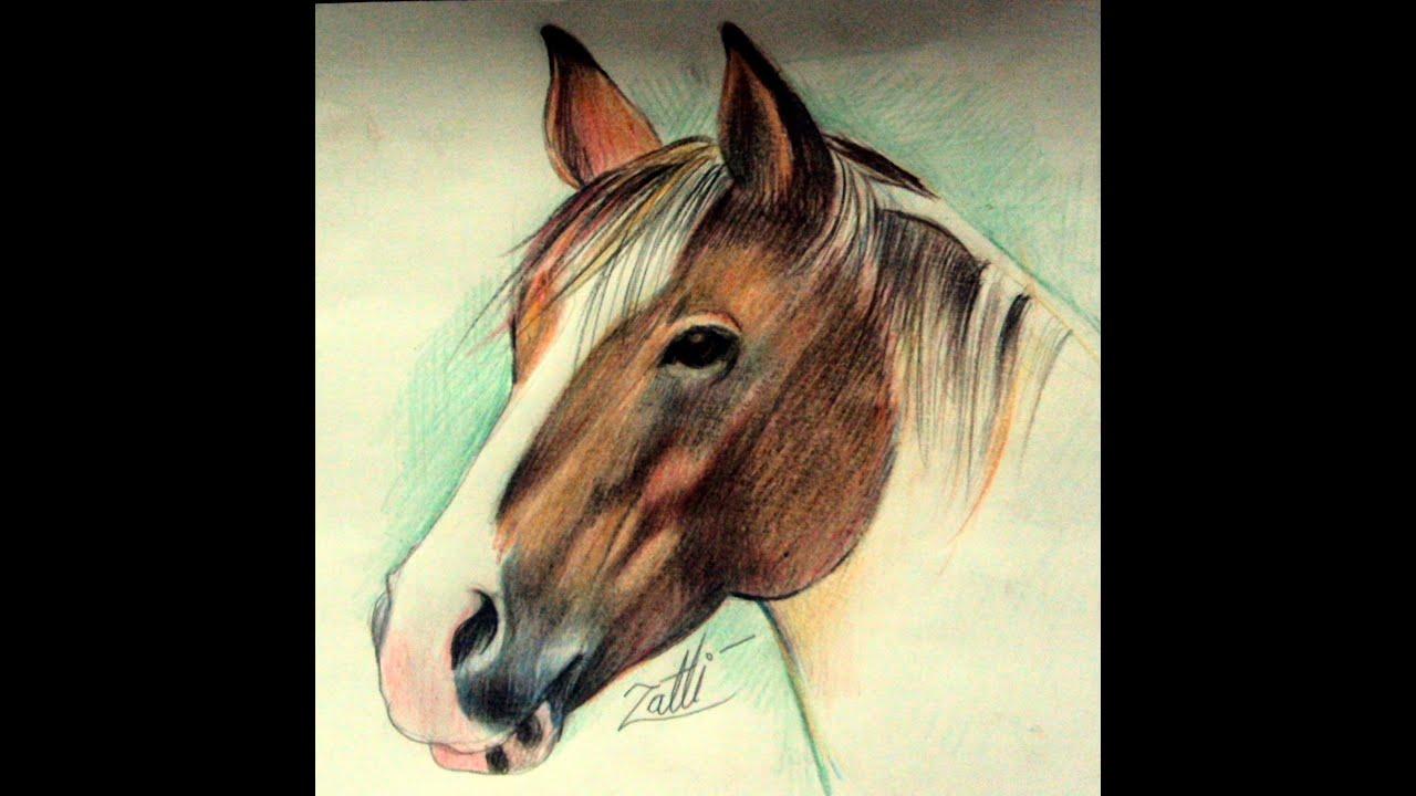 Como Desenhar E Colorir Um Cavalo Youtube