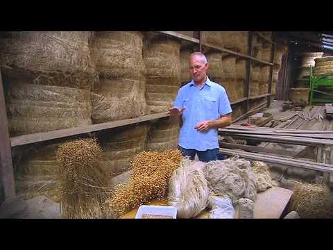 Koewacht - vlas een duurzaam product