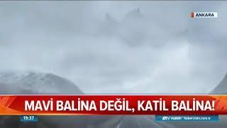 Mavi balina değil, katil balina - Atv Haber 18 Temmuz 2019