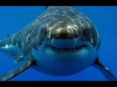 shark-week:-hungry-shark-world