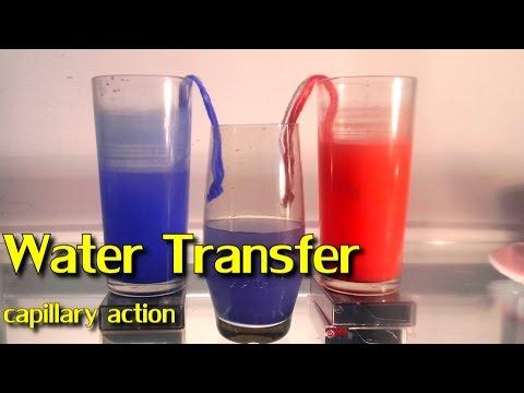 Fun Water Experiment / Capillary Action