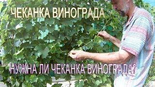 Виноград 2017.Чеканка винограда в августе.Нужна ли чеканка винограда?Работы с виноградом в августе