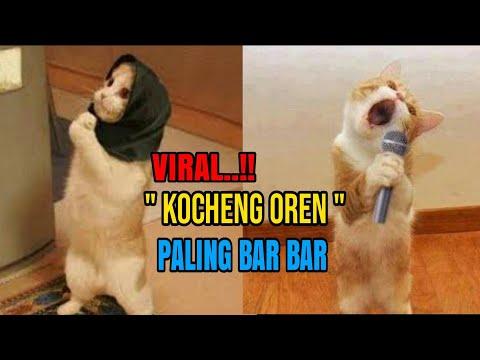 Ngakak 7 Video Kocheng Oren Bar Bar Yang Bikin Ngakak Ll