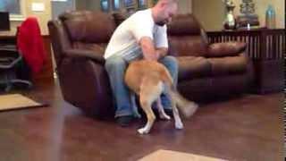 Nervous Aggressive Shelter Dog Rehab - The Calm K9 Dog Training