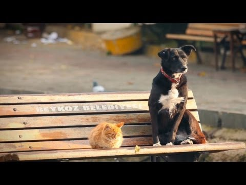 """Cats, Dogs, and Us"" - Animal Action Education - English"
