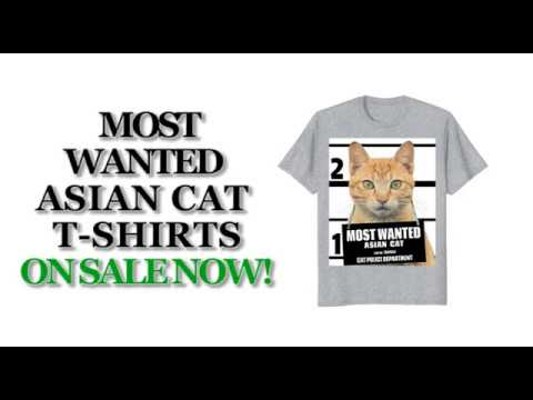 Most Wanted Asian Cat Cute Funny T shirt - Men's, Women's, Kid's - Navy, Asphalt, Heather Grey