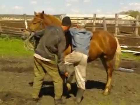 Видео-красивые лошади