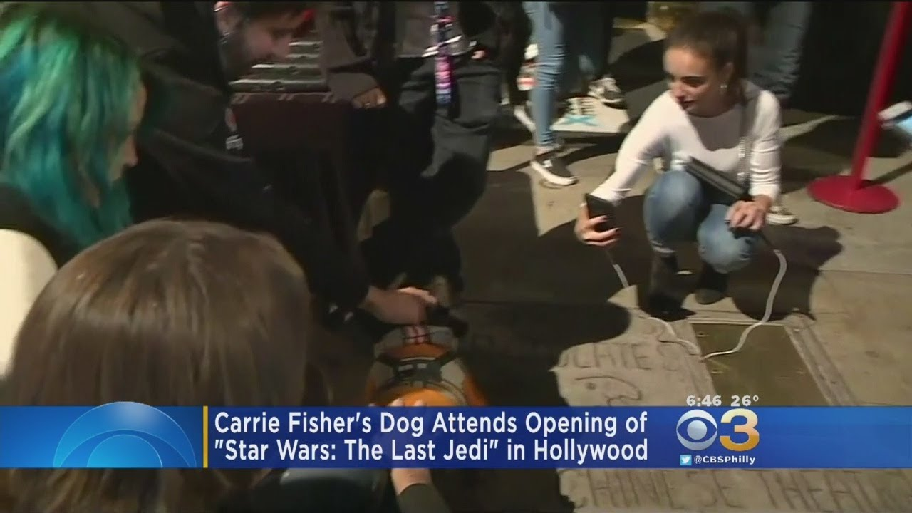 Carrie Fisher's Bulldog Attends Star Wars Premiere