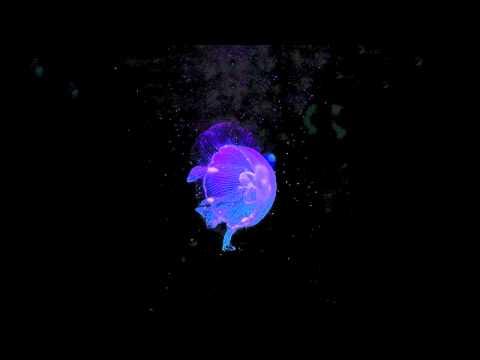 oriJanus - Phylum