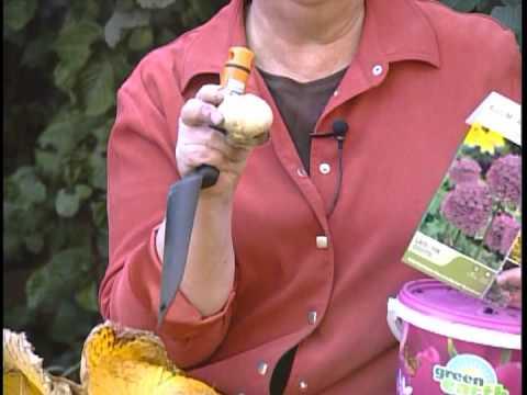 Gardening Tips Hosta Bulb Youtube