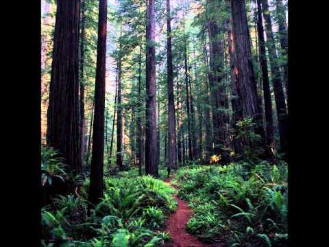 Carbon Based Lifeforms - Central Plain