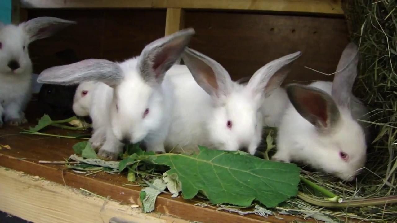 породы кроликов - YouTube