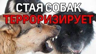 В Ухте стая бездомных собак охотится на жителей. Видео от первого лица