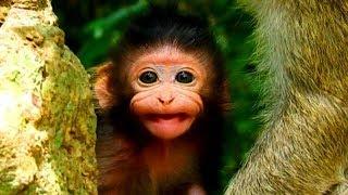 Adorable baby monkey Lizza was talking very cute, Cutest baby monkey 2019