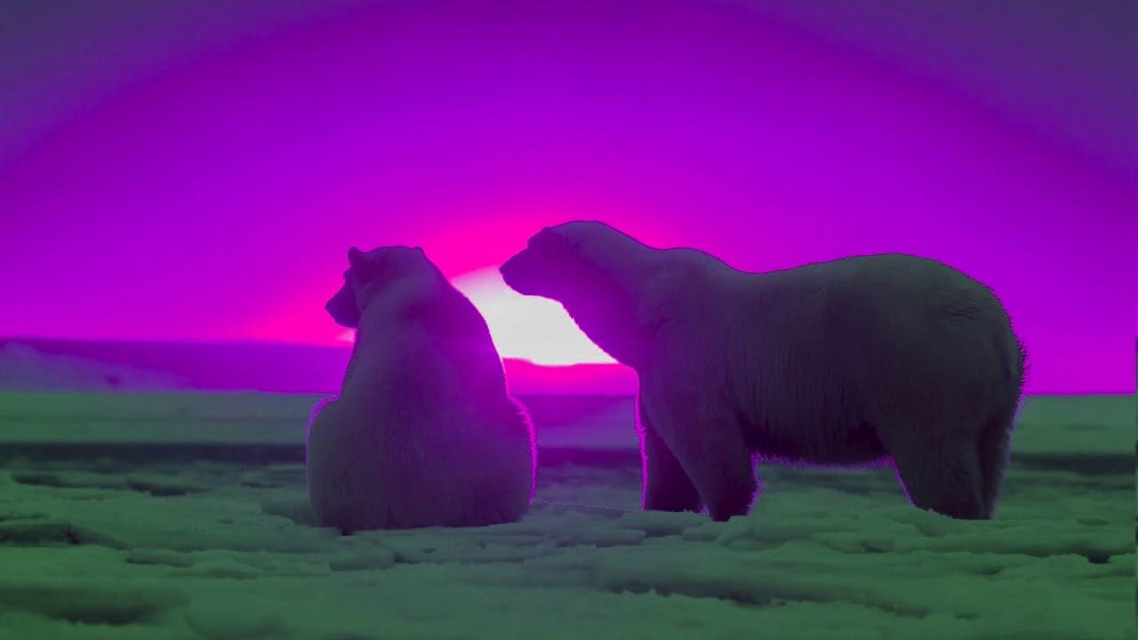 Der Eisbär Der Die Sonne Liebte Gute Nacht Geschichte 1