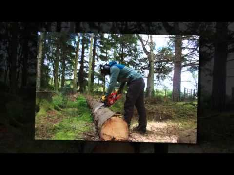Arboriculture And Land Management - Cortis Land & Tree Management