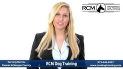 Dog Agility Training Bergen County
