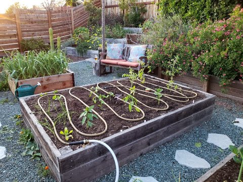 Garden Irrigation Solutions: Explore DIY drip, soaker hoses, clay ollas, and even rainwater capture!