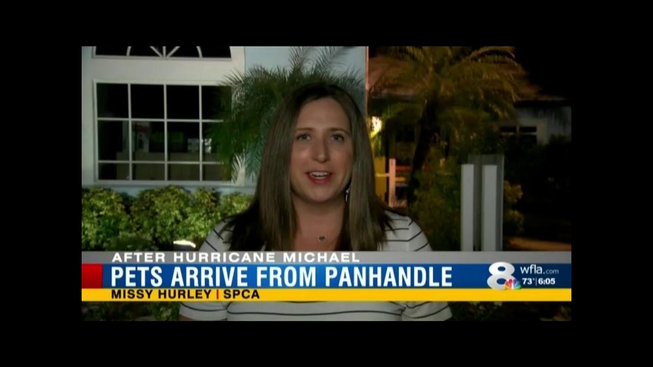 f4307beb1b8730 WFLA  SPCA Tampa Bay helps animals after Hurricane Michael - YouTube